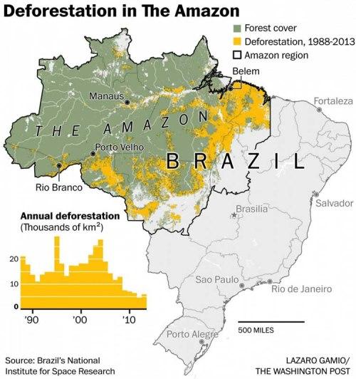 BLOG Deforested