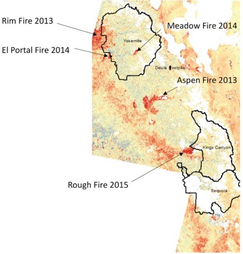 Map of change in live vegetation cover from Landsat image comparisons between 2011 and 2015 for the southern Sierra mountain region and National Parks. The darkest red shades outside of the wildfires labeled with arrows were verified as forest stands with the highest levels of tree die-back. Credits: NASA