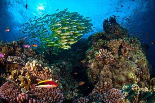 Great Barrier Reef inhabitants. Photograph by Matt Curnock.