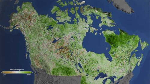 Using 29 years of data from Landsat satellites, researchers at NASA have found extensive greening in the vegetation across Alaska and Canada. Rapidly increasing temperatures in the Arctic have led to longer growing seasons and changing soils for the plants. Scientists have observed grassy tundras changing to scrublands, and shrub growing bigger and denser. From 1984–2012, extensive greening has occurred in the tundra of Western Alaska, the northern coast of Canada, and the tundra of Quebec and Labrador. Credits: NASA's Goddard Space Flight Center/Cindy Starr