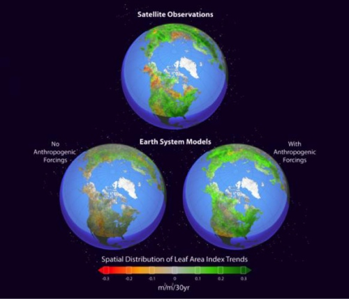 Earth system models simulate Northern Hemisphere greening. Figure shows the spatial distribution of leaf area index trends [m2/m2/30yr] in the growing season [April–October] during the period of 1982–2011 in the mean of satellite observations [top], Earth system model (ESM) simulations with natural forcings alone [lower left] and ESM simulations with combined anthropogenic and natural forcings [lower right].