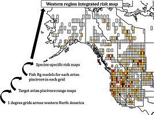 From the study, a map of major regions afflicted by mercury contamination.