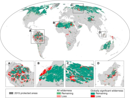 Change in the Distribution of Wilderness and Globally Significant Wilderness Areas since the Early 1990s Globally significant wilderness areas are defined as wilderness areas >10,000 km2. The insets are focused on the Amazon (A), the western Sahara (B), the West Siberian taiga (C), and Borneo (D).