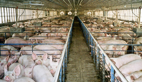 blog-hogs