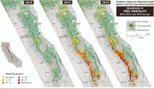 Three maps reveal the stunning progression over the course of three years of drought-created tree deaths in the mountains that form the spine of California from north to south. From the U.S.F.S.