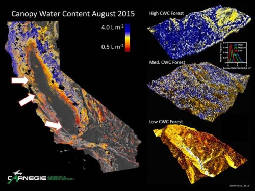 While forests at all three study sites (Pepperwood Preserve to the north, Blue Oak Ranch, and Canyon Ranch to the south) showed signs of water stress by August 2015, the leaf canopy of trees held progressively less water the further south they were.
